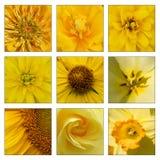 Collage des fleurs jaunes Image stock