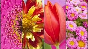 Collage des fleurs jaunes et roses rouges Image libre de droits