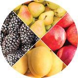 Collage des fruits et des baies sous forme de cercle Photo stock