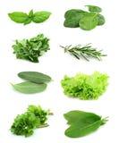 Collage des Grüns und des Saftgewürzs Stockbilder