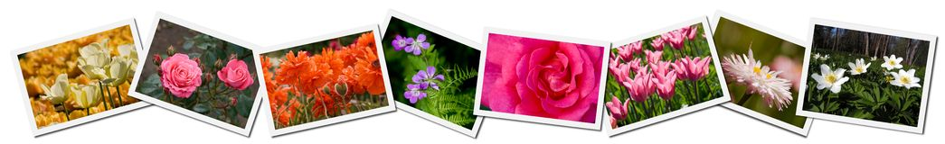 Collage des illustrations de fleur Photo stock