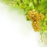 Collage des lames de vigne et du raisin jaune images stock
