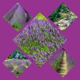Collage des Lavendels vor dem abbaye de Senanque in Provence Stockbilder
