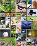 Collage des oiseaux Photos stock