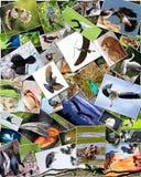 Collage des oiseaux Photographie stock libre de droits