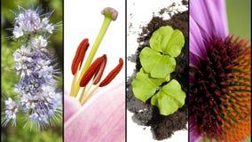 Collage des pièces de fleur en plan rapproché extrême Image stock