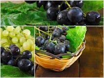 Collage des raisins verts et noirs Images libres de droits