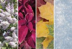 Collage des scènes des quatre saisons Image libre de droits