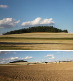 Collage des Waldes und des Feldes Lizenzfreies Stockfoto