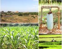 Collage di agricoltura Immagini Stock Libere da Diritti