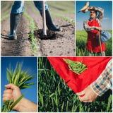 Collage di agricoltura Fotografia Stock Libera da Diritti