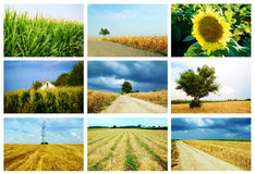 Collage di agricoltura Fotografie Stock