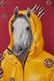 Collage di arte contemporanea Donna di concetto con la testa di cavallo fotografia stock