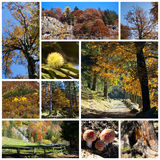 Collage di autunno fotografia stock libera da diritti