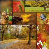 Collage di autunno Fotografia Stock