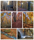Collage di autunno Immagine Stock