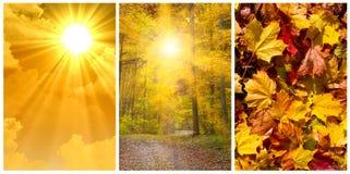 Collage di autunno Fotografia Stock