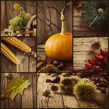 Collage di autunno Immagini Stock