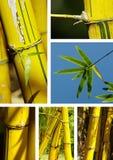 Collage di bambù Immagine Stock