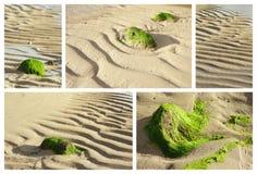 Collage di bassa marea, Mauritius Fotografia Stock