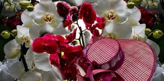 Collage di bei fiori della molla Immagini Stock Libere da Diritti