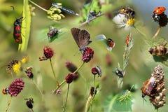 Collage di bei insetti differenti come manifesto fotografia stock