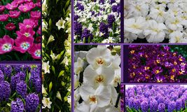 Collage di bello fiore della molla fotografia stock