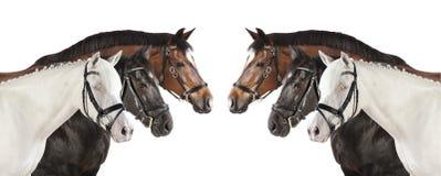 Collage di bianco dei cavalli Immagini Stock