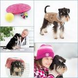 Collage di cura del cane Fotografia Stock