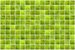 Collage di erba verde Ambiti di provenienza della primavera Immagini Stock