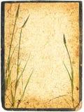 Collage di erbe pagina Immagini Stock
