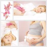 Collage di gravidanza Fotografia Stock Libera da Diritti