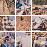 Collage di picnic di autunno Fotografie Stock