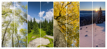 Collage di quattro stagioni dalle insegne verticali Fotografie Stock