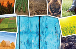 Collage di tema della foto di agricoltura con lo spazio della copia Fotografie Stock Libere da Diritti