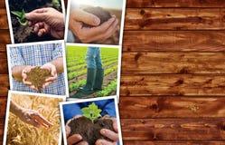 Collage di tema della foto di agricoltura con lo spazio della copia Fotografia Stock