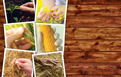 Collage di tema della foto di agricoltura con lo spazio della copia Immagine Stock Libera da Diritti