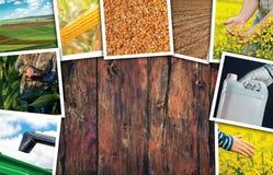 Collage di tema della foto di agricoltura con lo spazio della copia Fotografie Stock