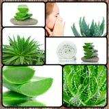 Collage di tema della pianta dell'aloe Immagine Stock