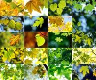 Collage di tema di autunno Fotografie Stock Libere da Diritti