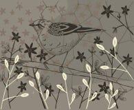 Collage di un uccello e di varie piante Fotografia Stock