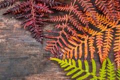 Collage, die Jahreszeit von Frühling zu Herbst symbolisiert Lizenzfreie Stockfotografie