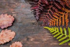 Collage, die Jahreszeit von Frühling zu Herbst symbolisiert Lizenzfreies Stockfoto