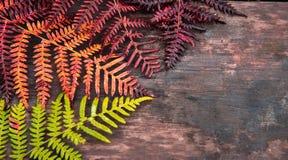 Collage, die Jahreszeit von Frühling zu Herbst symbolisiert Stockfoto