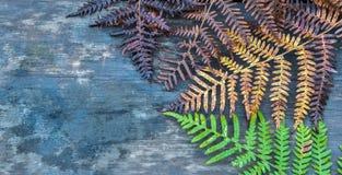 Collage, die Jahreszeit von Frühling zu Herbst symbolisiert Lizenzfreies Stockbild