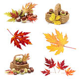 Collage from different autumn leaves and chestnuts Royalty Free Stock Photos