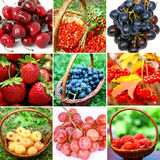 Collage of different berries Stock Images