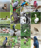Collage of different birds Royalty Free Stock Photo