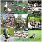 Collage of different birds stock images