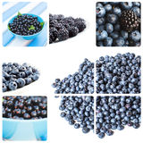 Collage of different blue berries. Stock Photo